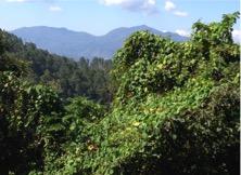 Santa-Barbara-Mtns-2015