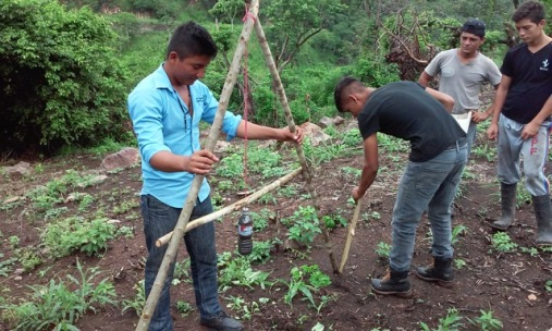 Two young men who attended a well-known agricultural institute on Village Children Honduras scholarshipsare showing what they have learned to others.