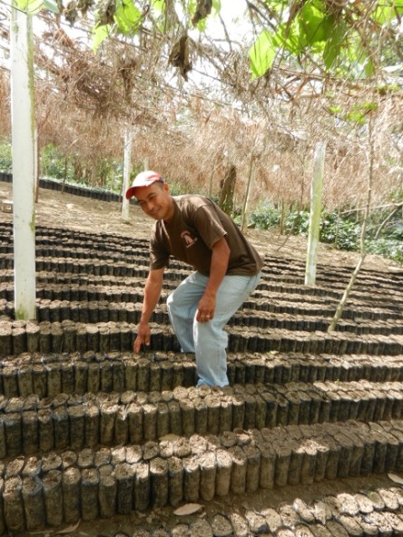 Noe Garcia has found another way to make money from coffee. He sells tens of thousands of rust-resistant coffee seedlings each year.